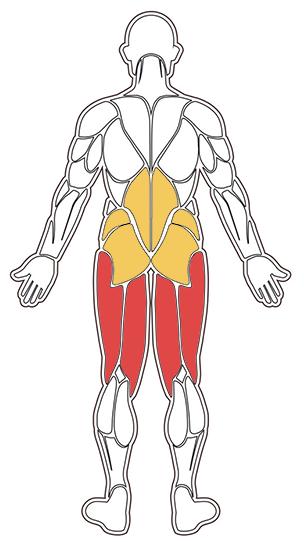 sumomarklyft muskler använda